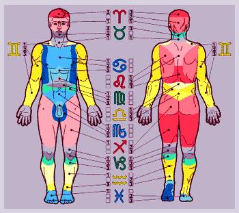 Связь Знака Зодиака с телом человека