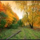 Гороскоп на неделю с 19 ноября по 25 ноября 2012 года