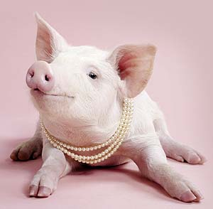 Год Свиньи, элемент года