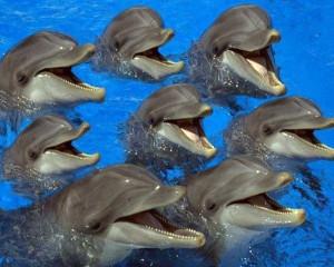 Работа с дельфинами. Информация о воде