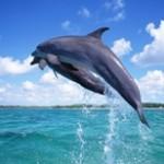 Дельфин. Зороастрийский гороскоп