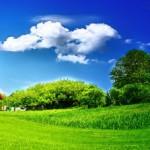Целительная энергетика деревьев