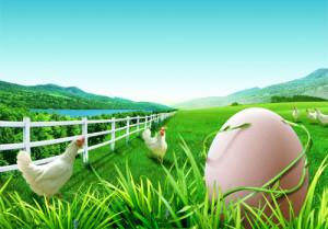 Кто появился первым, яйцо или курица?