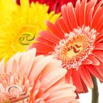 какие цветы выбрать для каждого знака зодиака