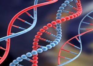 ДНК - трафареты Творения