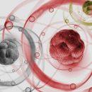 Что такое квант и почему его так любят ?