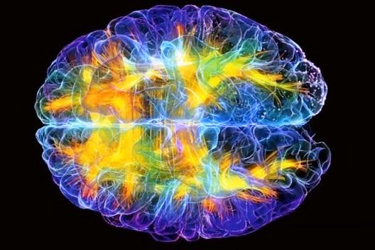 Твори свою реальность: мозг и его эффекты