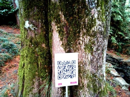 Метасеквойя (Metasequoia), ствол_myheavengatecom.jpg