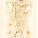 О чем болит спина? О психологической составляющей проблем с позвоночником