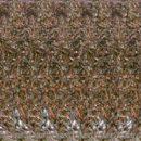 3D-изображение Трехмерное изображение