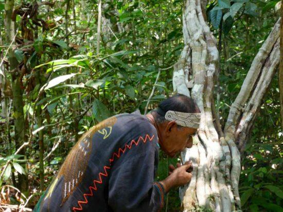 Аяуаска: шаманская практика очищения и исцеления