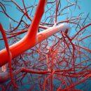 Холестерин. Kрупнейшая афёра нашего века