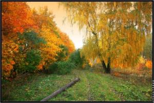 Общая характеристика энергий ноября