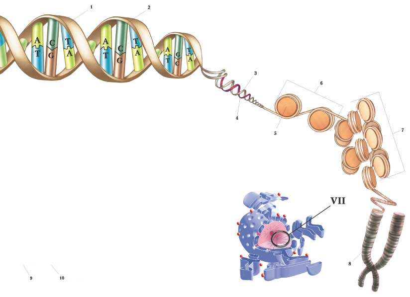 Код ДНК