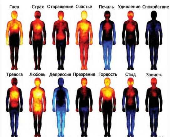 Эмоции в теле исследованые телесно-ориентированно