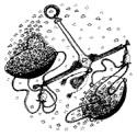 весы гороскоп на 2017 год
