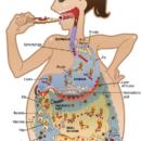 Пищевая токсичность: продукты, ворующие энергию нашего организма
