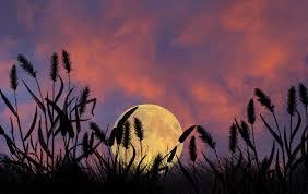 Время Урожайной Луны -Чжунцю