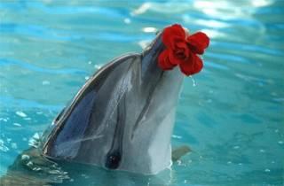 связь с дельфинами