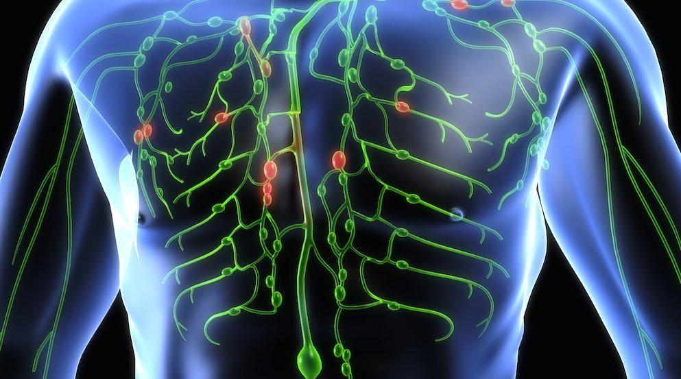 как почистить лимфатическую систему