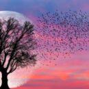 супер луна 7 мая
